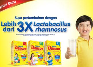 bakteri lactobacillus